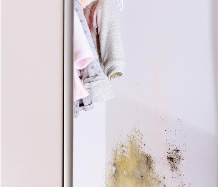 Mold Remediation Mold Inspection in Oviedo, FL