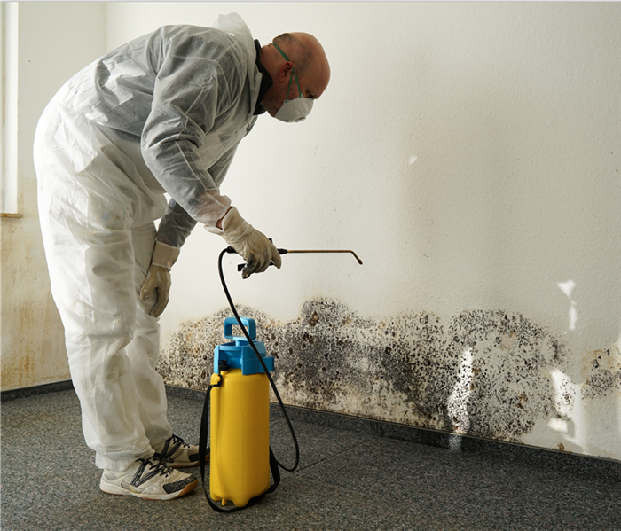 Mold Remediation 4 Safety Items Every Mold Professional Needs